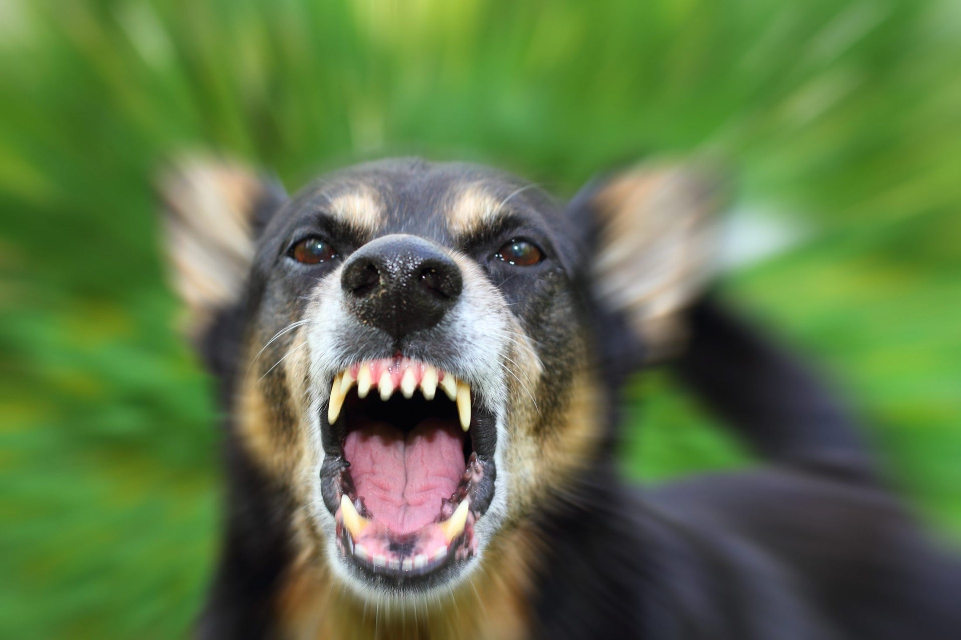Learn the signals that your dog is peeved.