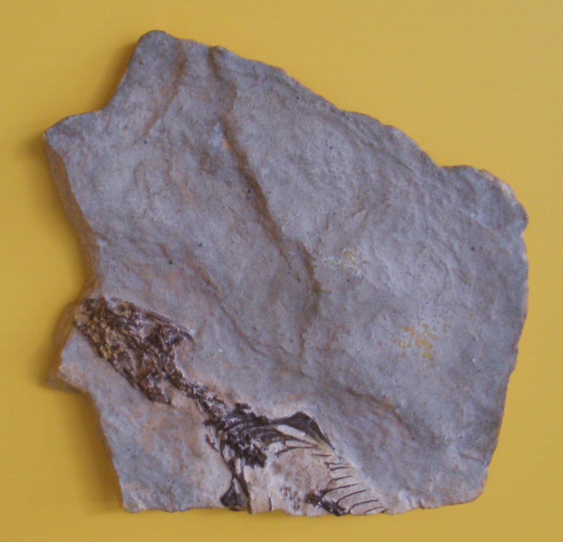 Megachirella is an extinct genus of lepidosauromorph reptile from the Middle Triassic and contains one species, Megachirella wachtleri, from the Dolomites of northern Italy.