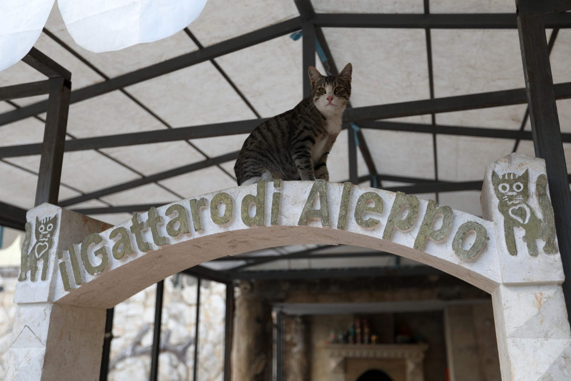 A cat sits at the entrance of the sleeping area of Ernesto's Cat Sanctuary in Kfar Naha, an opposition-held town in Aleppo province in Syria on March 17, 2018.