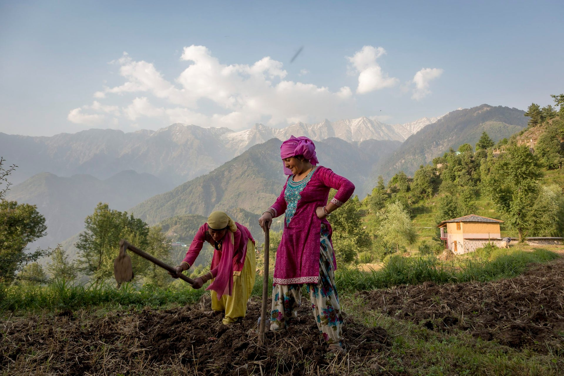 Women prepare a field for sowing corn in Dharmsala, India, May 22, 2018.
