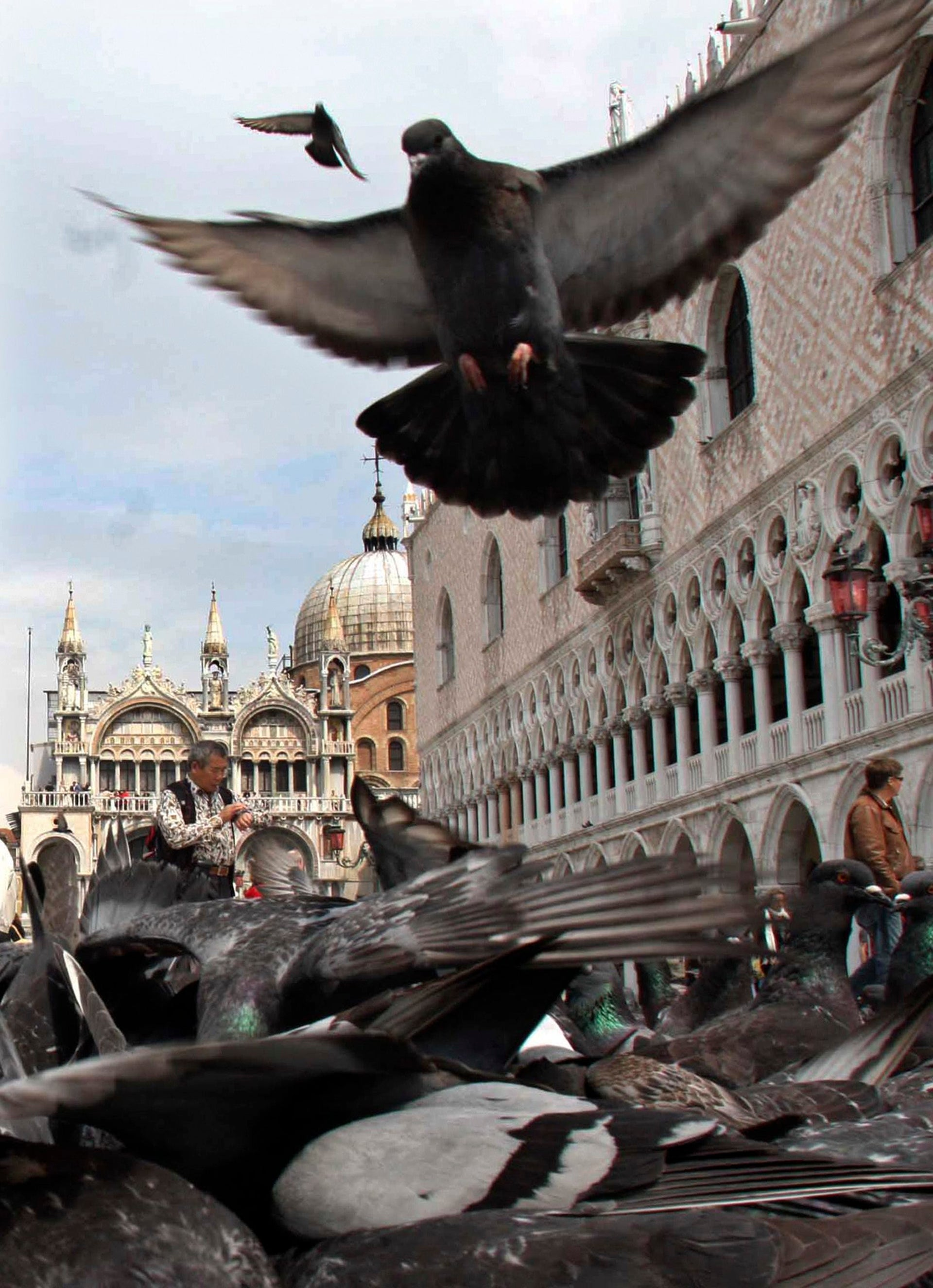 Pigeons swoop down as tourists feed them corn in Saint Mark's square in Venice.
