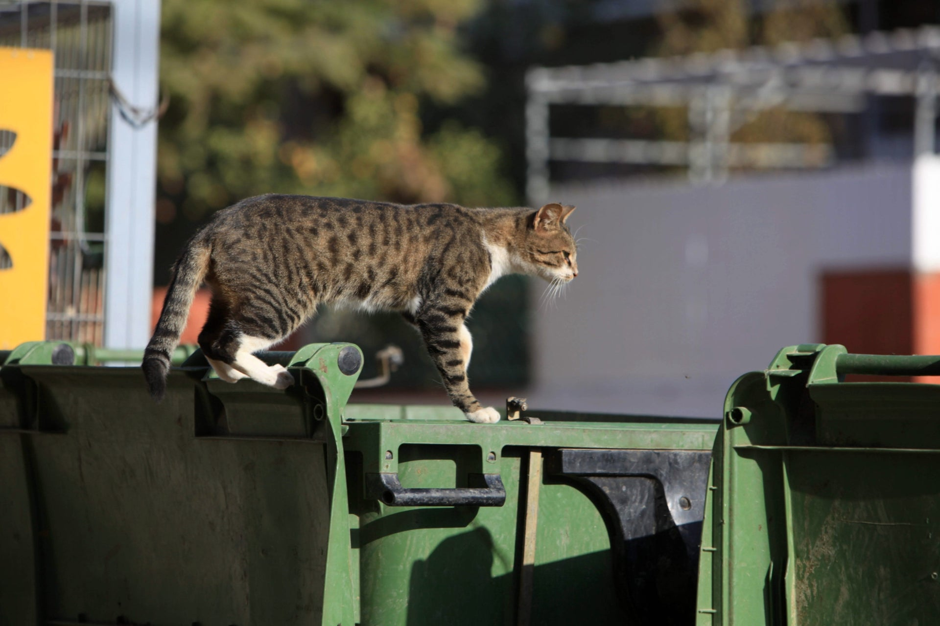 Not everyone is unhappy about the glut of garbage bins in Israel, like this cat in Be'er Sheva.
