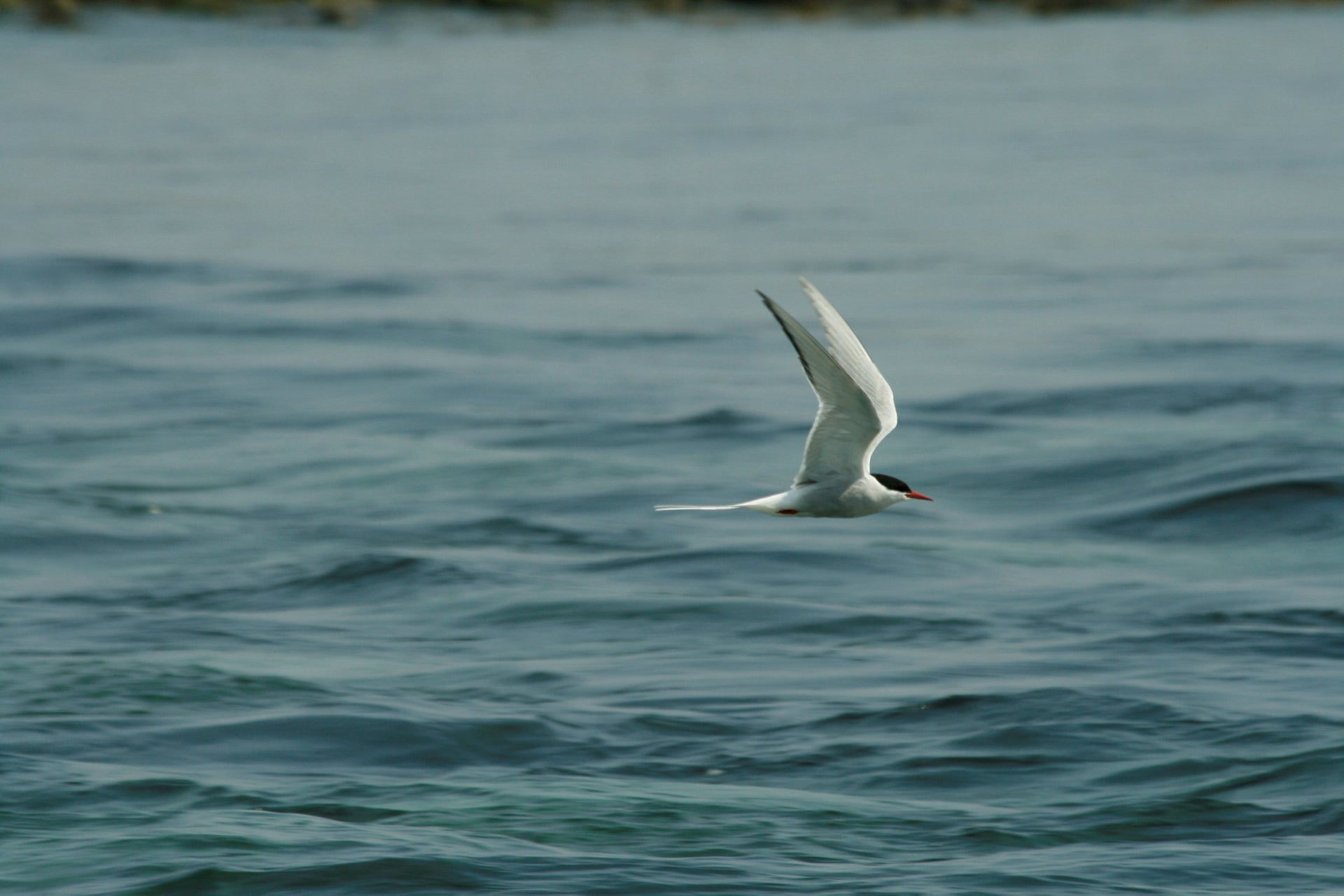 Arctic tern populations have declined in Canada in areas where climate has warmed rapidly/
