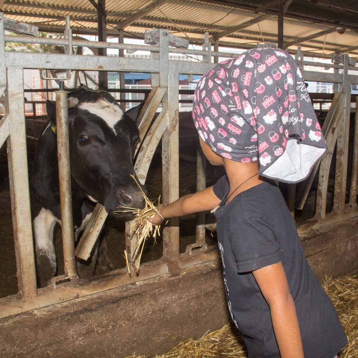 Mariam's 5-year-old daughter feeding a cow at Kibbutz Ma'agan Michael, northern Israel, July 2018.