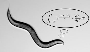 The lovely C. elegans: Worm neuron does differential equation