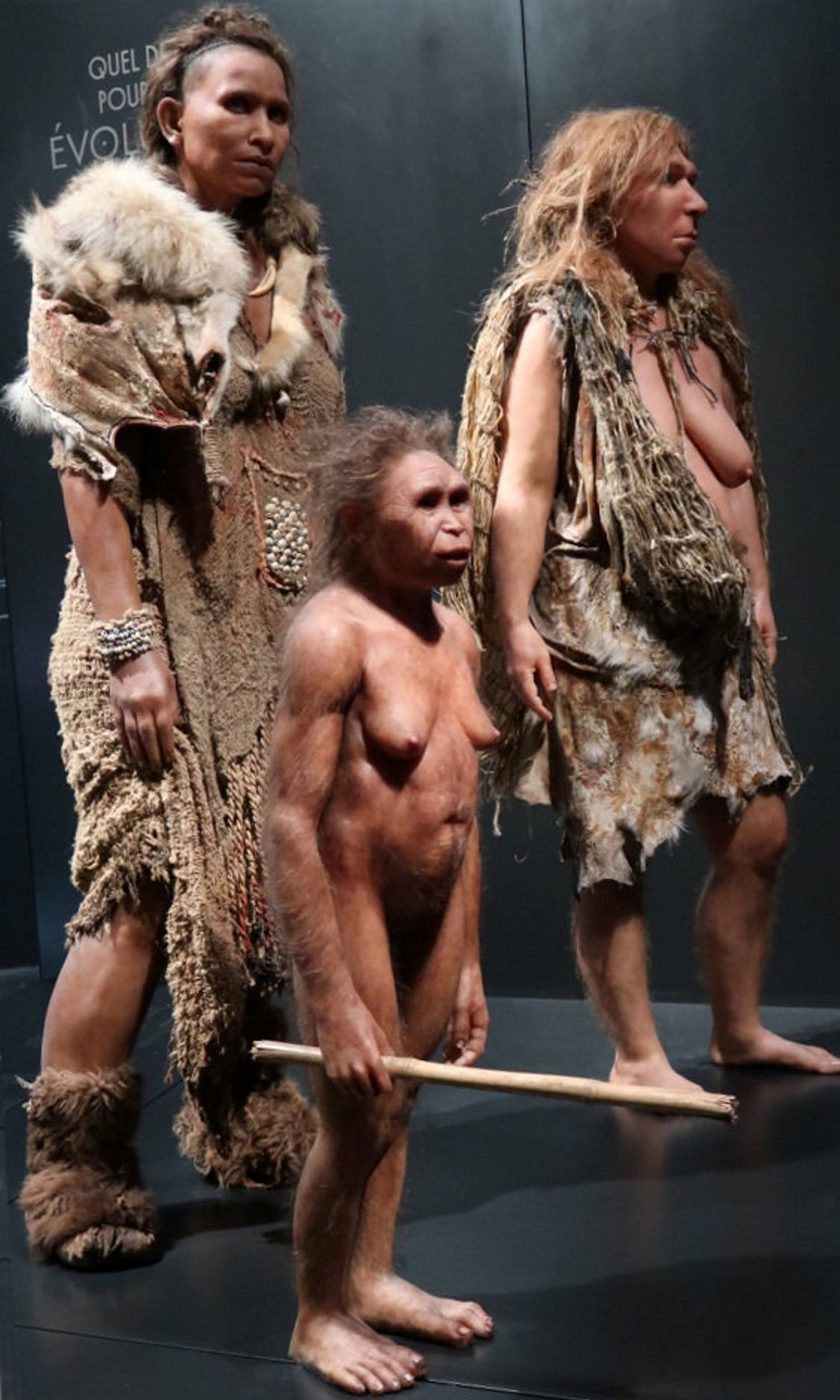 Reconstruction of human, hobbit and Neanderthal women, from left