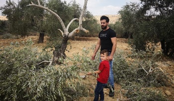 The trees vandalized near Ramallah, August 19, 2018