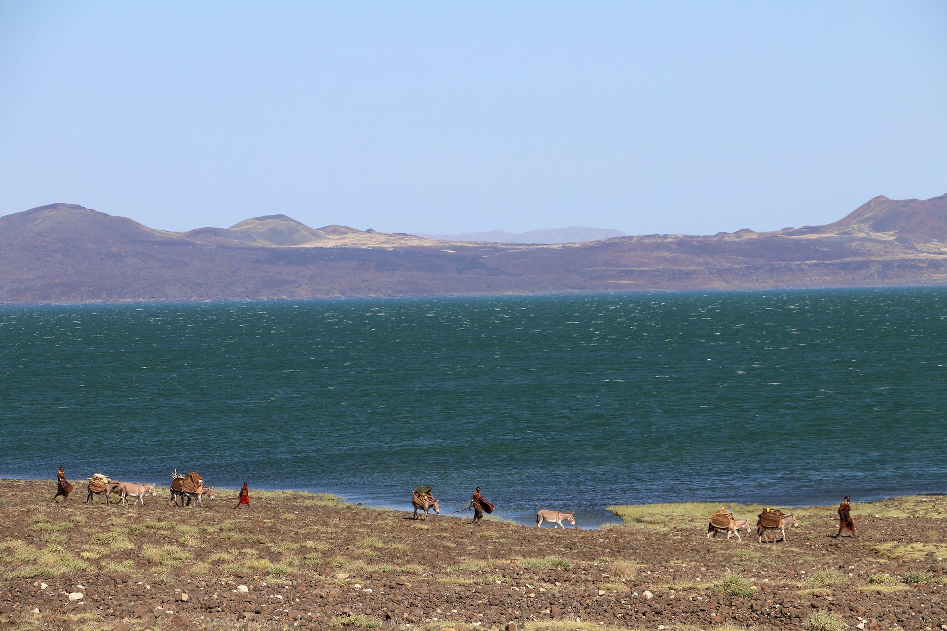 Lake Turkana: Photo shows hills behind the lake, and some pastoralists and their animals in front of it. The hills look purple-red, the lake blue-green and a little choppy.