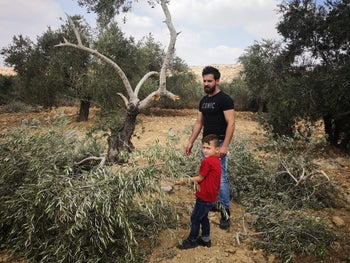 The trees that were vandalized in the West Bank.