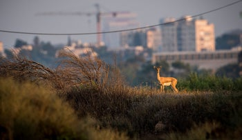 An animal at Apollonia National Park, in northern Herzliya