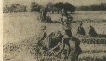 Pissarro's 'Picking Peas' painting, which was seized from a Jewish family during World War II and returned to its descendants after resurfacing at a Paris museum in 2018.