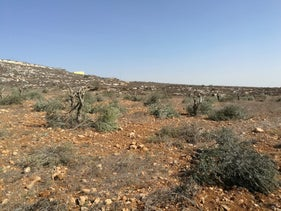 Olive trees uprooted in the village of Mreir, October 14, 2018.
