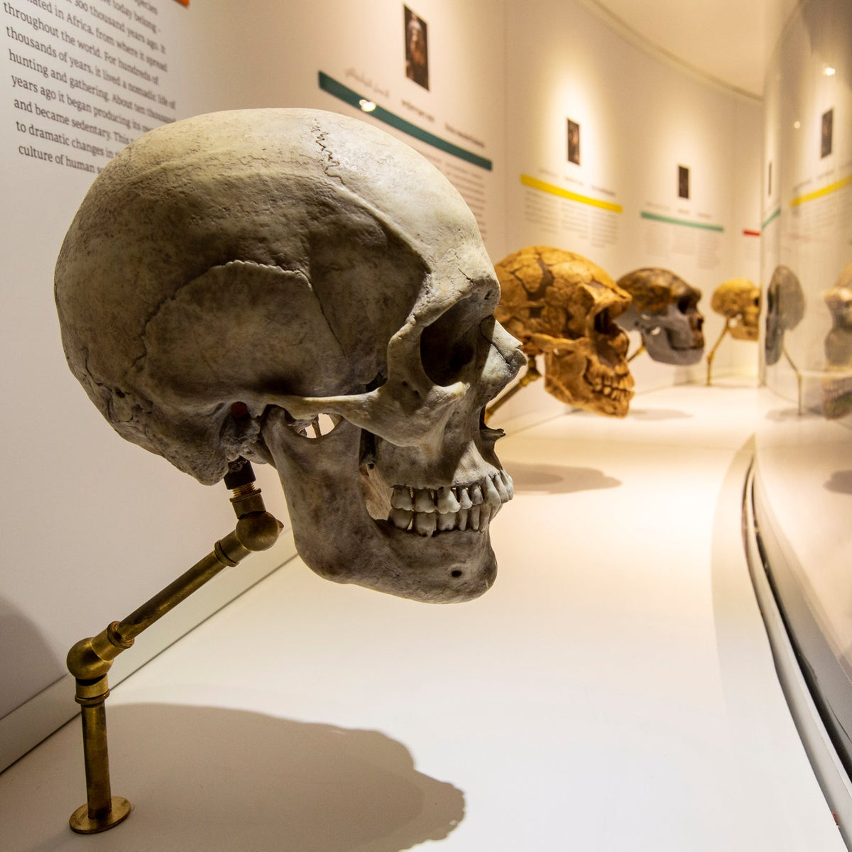"""A display in the """"What makes us human?"""" exhibition in the new natural history museum at Tel Aviv University."""