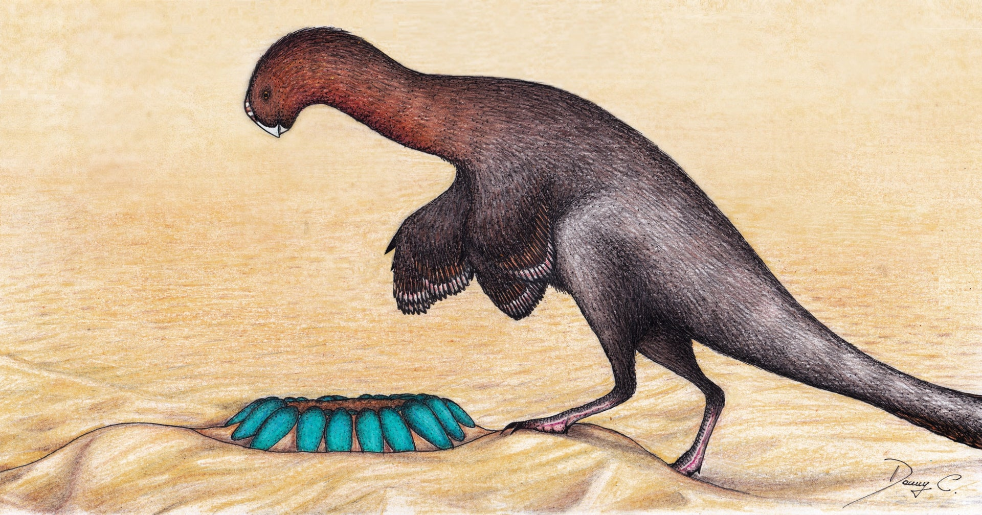 Artist's impression of the dinosaur Heyuannia with its nest of eggs