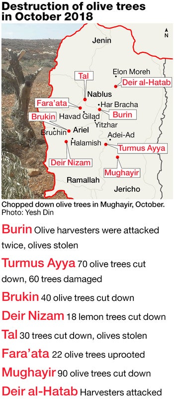Destruction of olive trees in October 2018