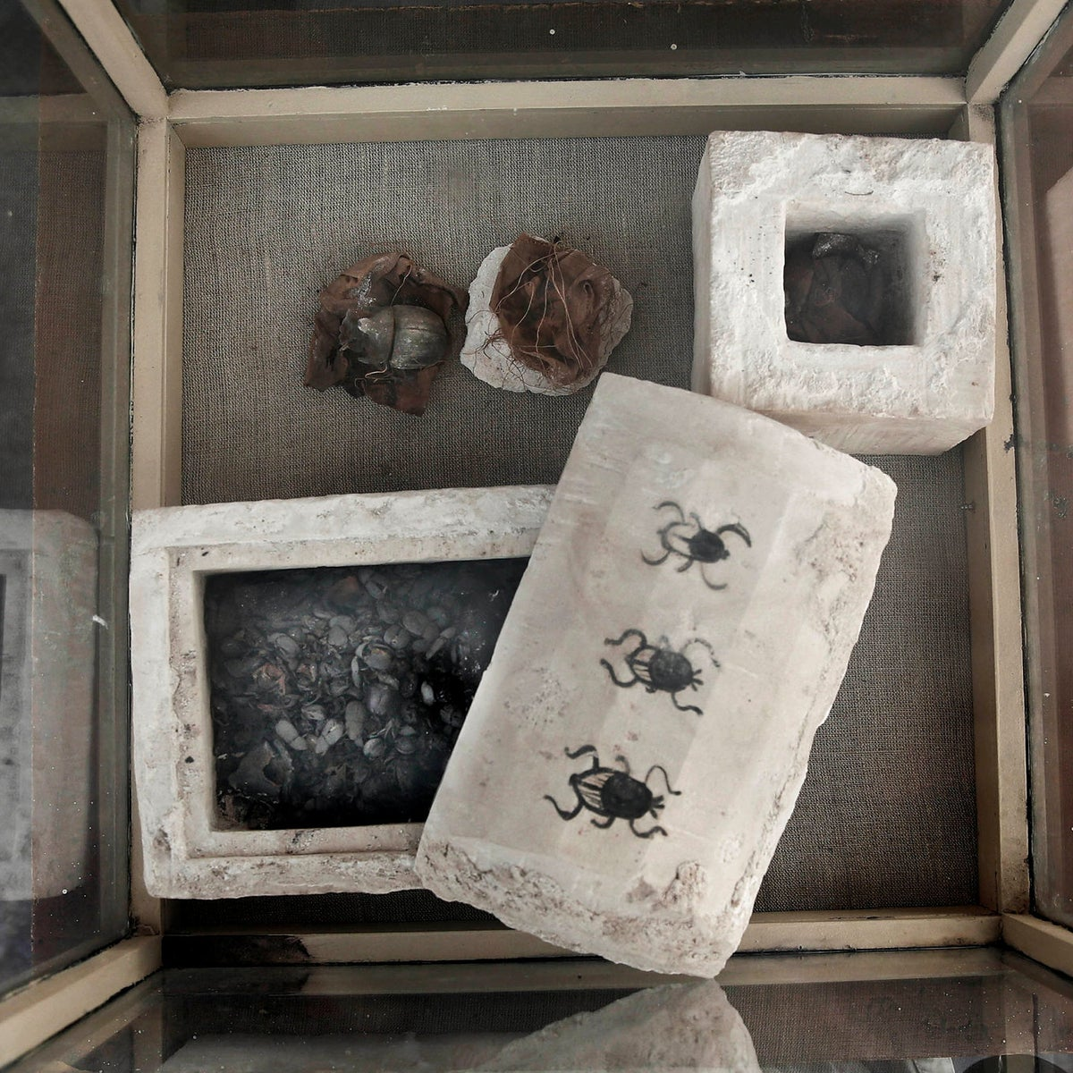 Mummified scarabs on display in a glass case found in a newly discovered tomb, at an ancient necropolis near Egypt's famed pyramids in Saqqara, Giza, Egypt, Saturday, Nov. 10, 2018. A top Egyptian antiquities official says local archaeologists have discovered seven Pharaonic Age tombs near the capital Cairo containing dozens of cat mummies along with wooden statues depicting other animals.