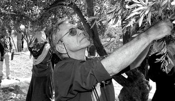 File photo: Renowned Israeli writer Amos Oz picks olives along with local Palestinians in the village of Aqraba near the West Bank town of Nablus, October 30, 2002.