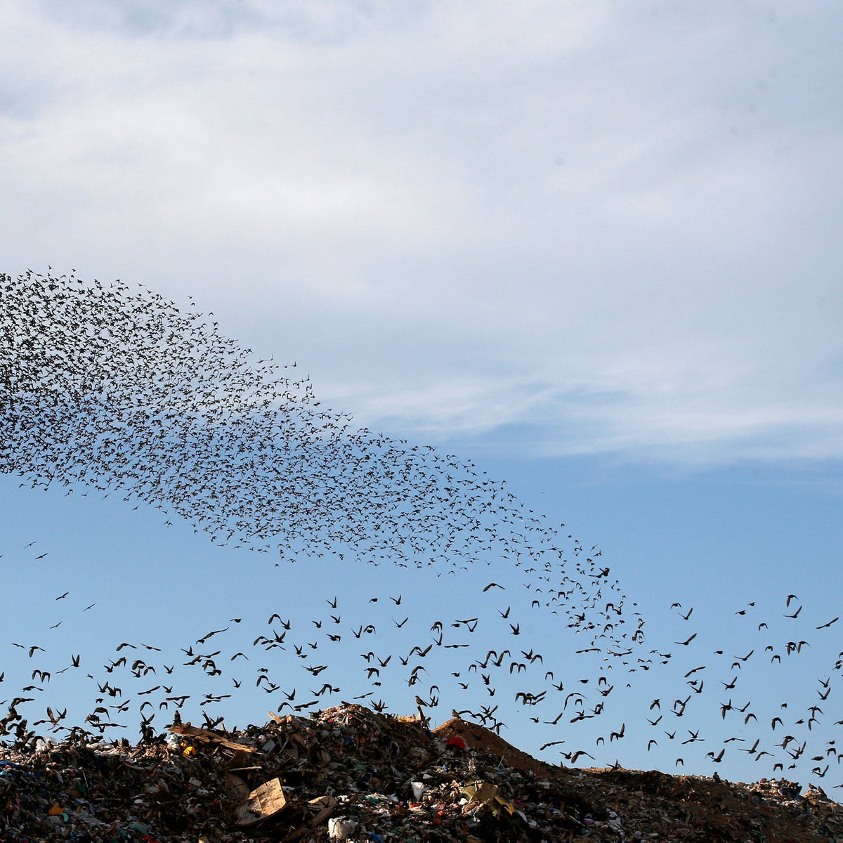 A murmuration of migrating starlings fly in a group above a waste facility near the city of Rahat, southern Israel January 1, 2019. Picture taken January 1, 2019.