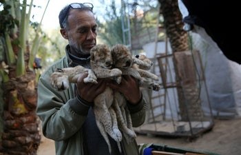 Zoo owner Fathi Jomaa holds the bodies of four lion cubs at his zoo in Rafah refugee camp, Gaza Strip, Friday, Jan. 18, 2019.