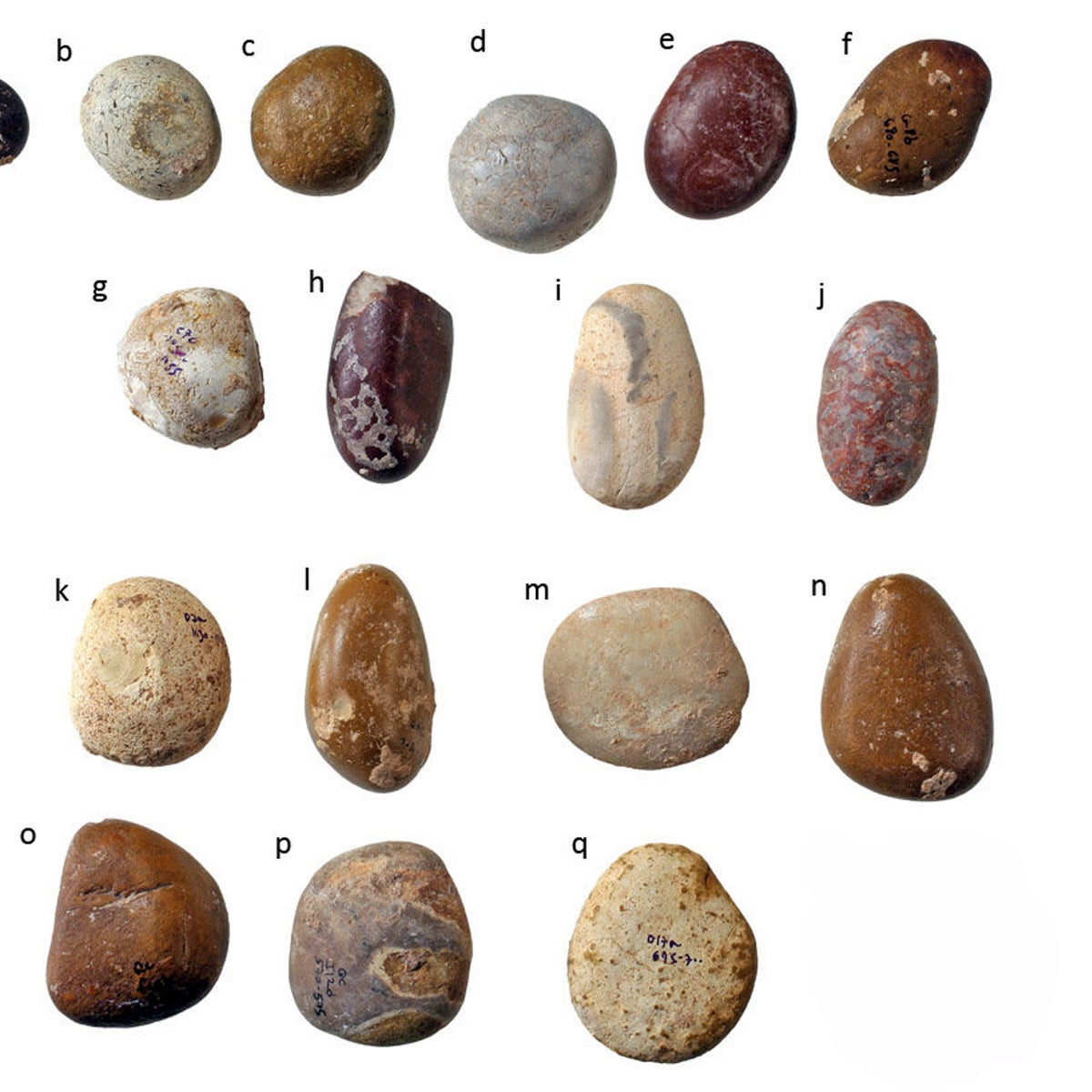 The collection of pebbles found at the prehistoric site of Qesem cave, central Israel