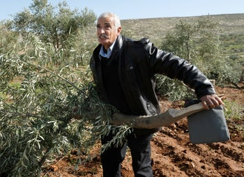 Abed al Hai Na'asan, with a butchered olive tree. The people of Al-Mughayyir say their problems have never been with the army, only with the settlers.