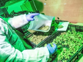 Medical marijuana is packed by a worker at the cannabis cultivating and processing plant of BOL Pharma – Revadim Industrial Centre in Lod, Israel, on Wednesday, January 23, 2019.