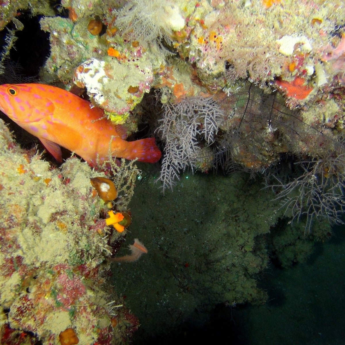 Fish photographed in the first-ever proper survey of the Red Sea depths