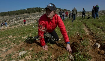 An American rabbinical student plants olive trees in village of At-tuwani, West Bank, January 25, 2019.