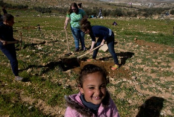 American rabbinical students plants olive trees in village of At-tuwani, West Bank, January 25, 2019.