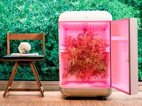 Seedo's 'indoor growing machine'