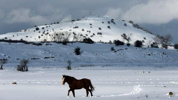 A horse walks in the snow in the Golan Heights, January 8, 2015