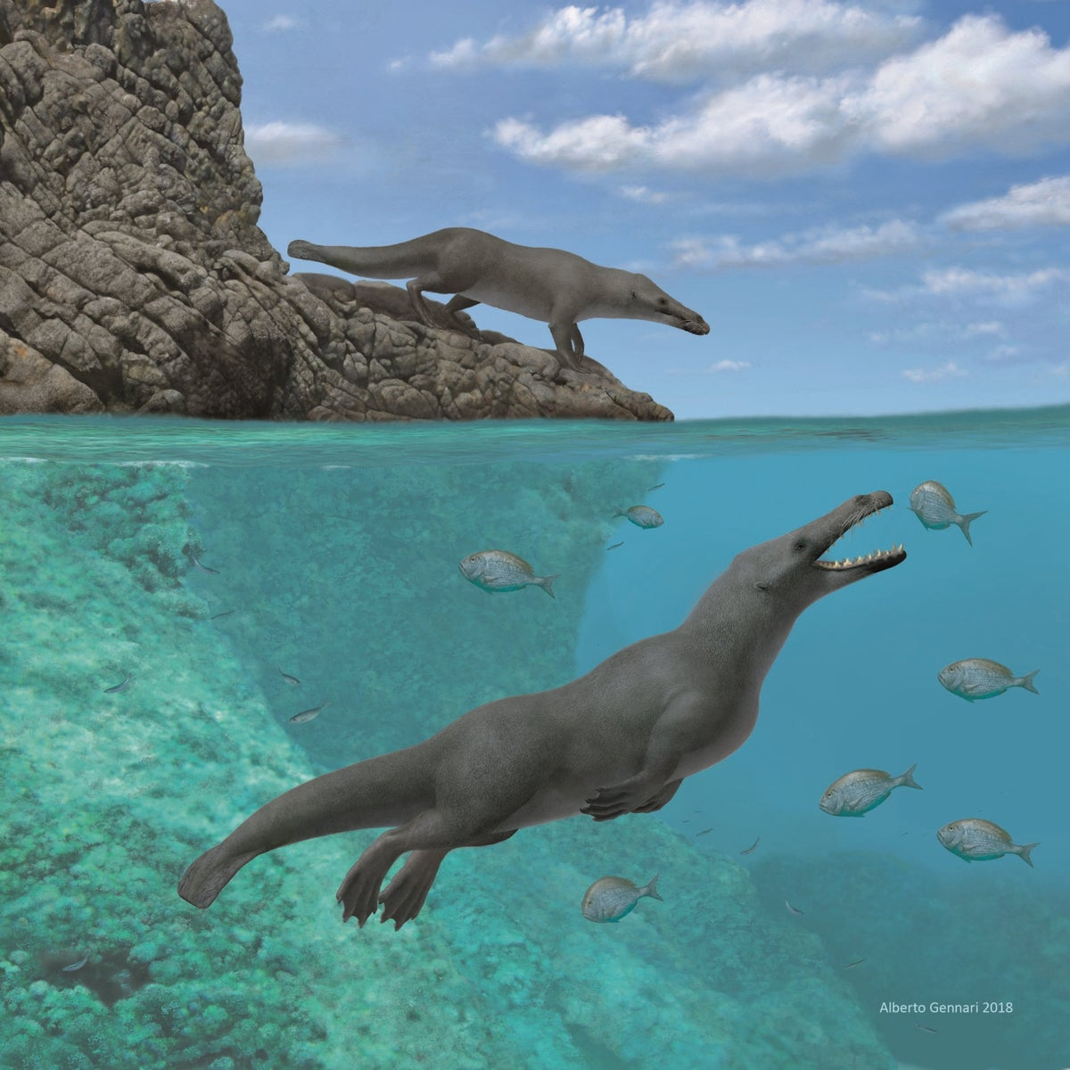 Artistic reconstruction of amphibious four-legged whale ancestor.