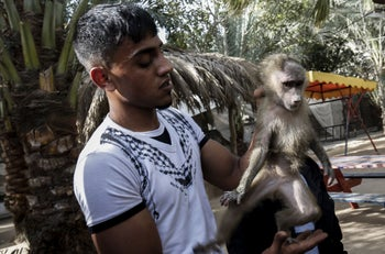 A Palestinian worker carries a monkey at a zoo in Rafah in the southern Gaza Strip, during the evacuation to sanctuaries in Jordan, April 7, 2019.