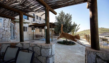 File photo: a cat jumps at a guest house advertised on Airbnb international home-sharing site in Nofei Prat settlement at the West Bank, January 17, 2016.