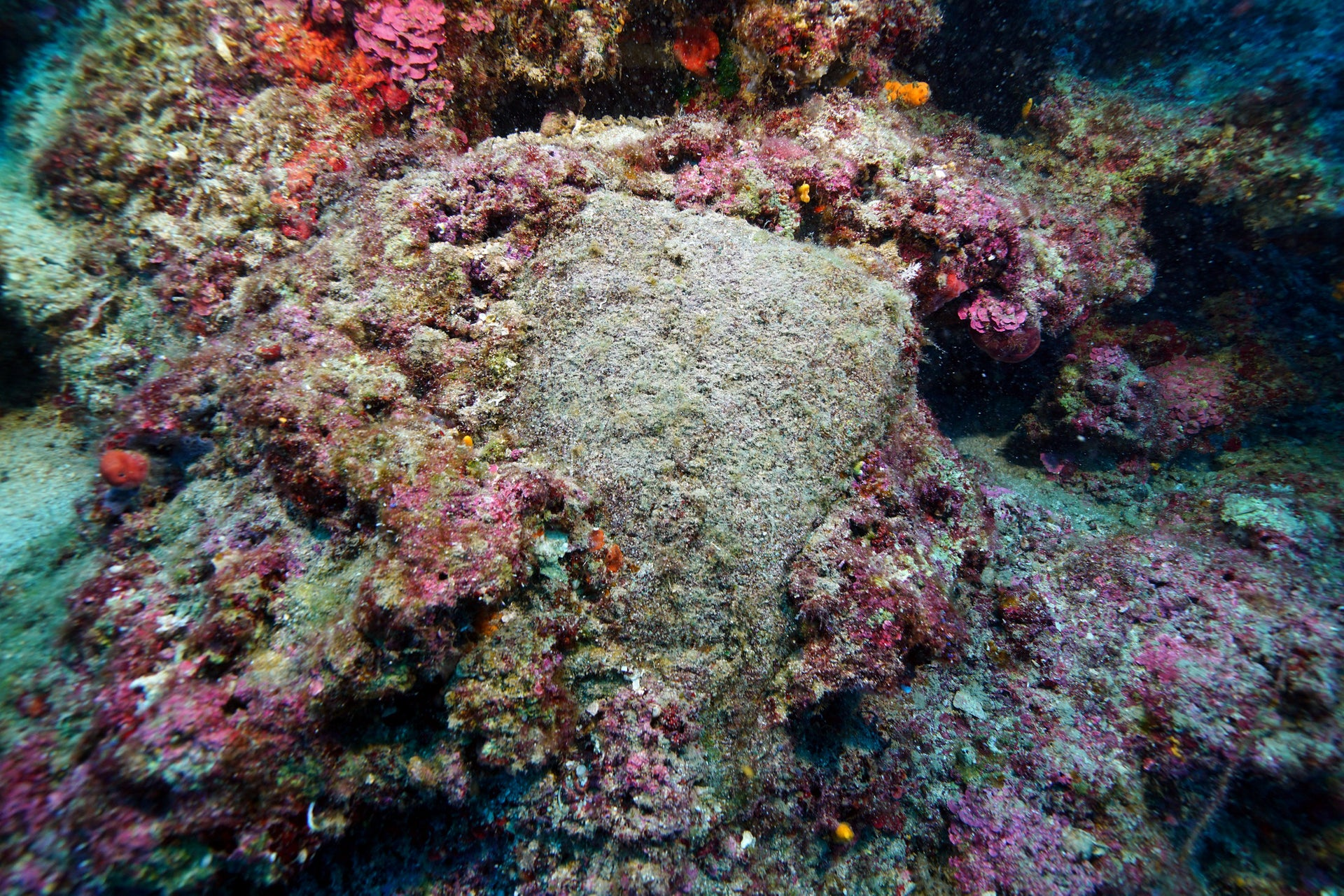 Encrusted pillow-shaped ingots on the seabed off Antalya