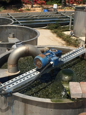 Treating impure water using algae in the mix