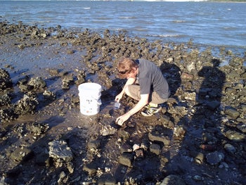 Stephen Atkinson collecting worms from the sand for analysis of possible myxozoan infection, in Charleston Harbor, South Carolina.