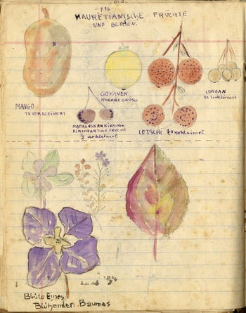 A sketch of fruit and flowers.