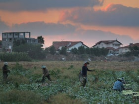 File photo: Migrant workers work in a field in central Israel, August 22, 2018.