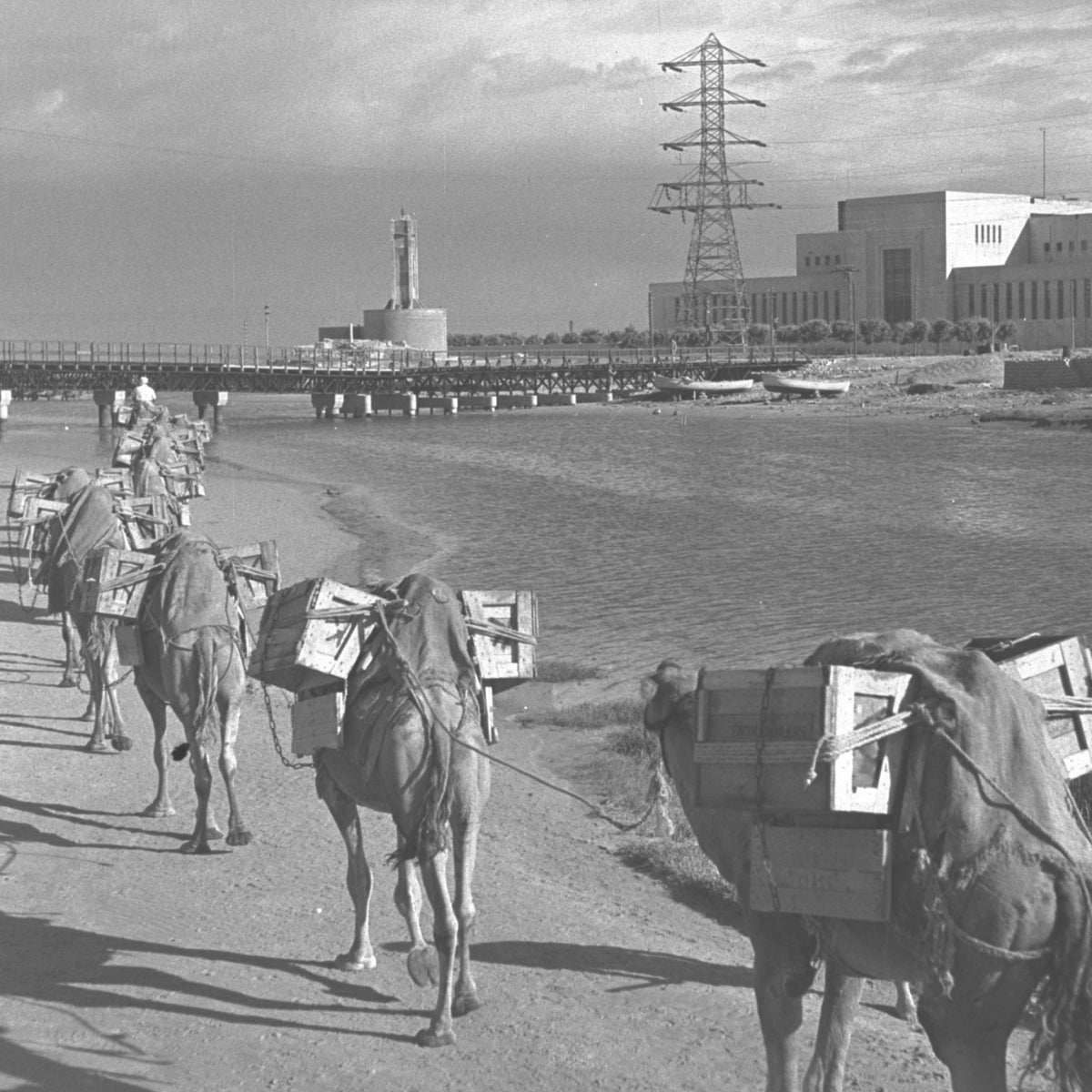 Camels near the Reading power station in Tel Aviv, in 1946.