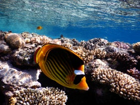 The coral reef in the Gulf of Eilat