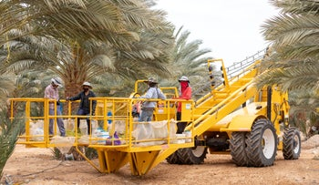 Migrant workers in a farm in southern Israel, April 2019.