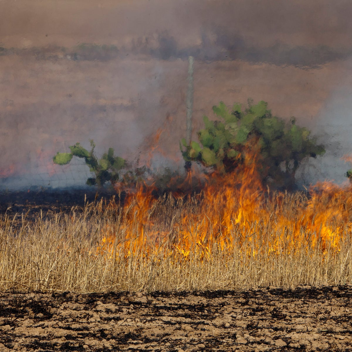 Palestinian incendiary balloons set wheat fields afire by Gaza