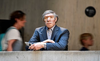 The reconstruction of a Homo neanderthalensis, who lived within Eurasia from circa 400,000 until 40,000 years ago, is seen in a modern business suit at the Neanderthal Museum in Mettmann, Germany, July 3, 2019.