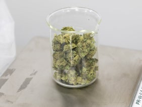 Marijuana being weighed on a scale in a laboratory, Ashkelon, July 23, 2019.