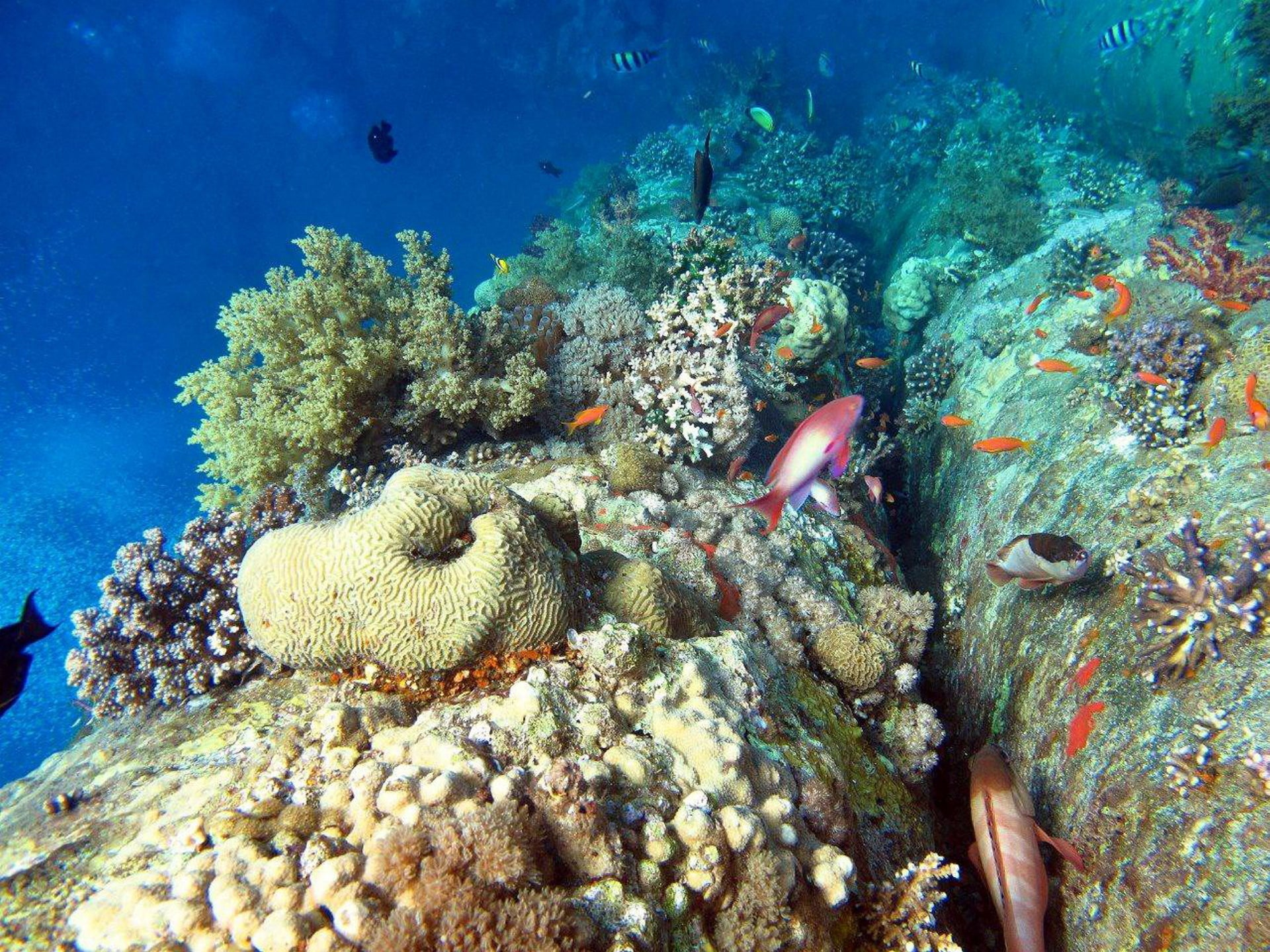 Corals are among the creatures that suffer during marine heatwaves