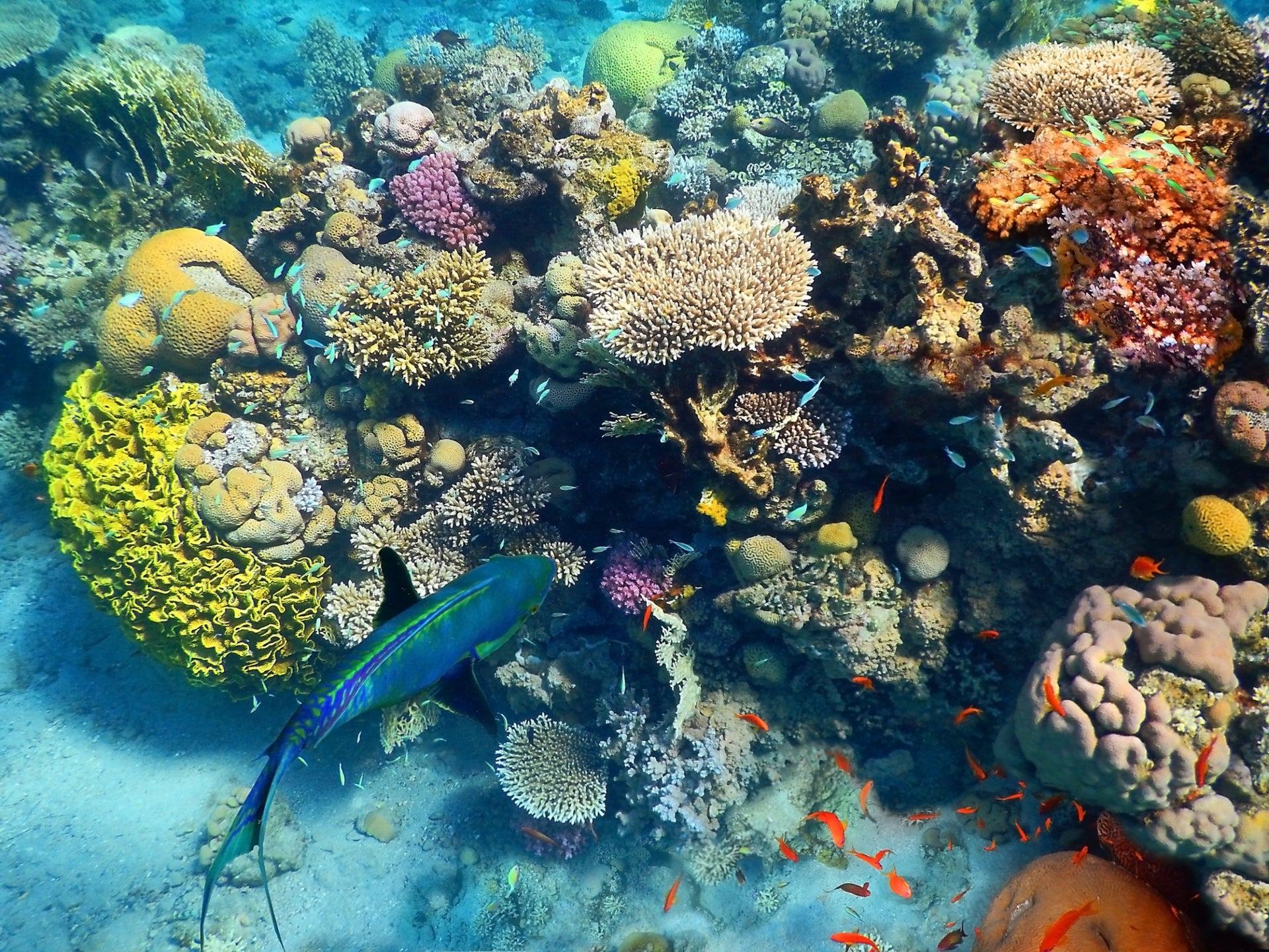 Multicolored corals and fish in Eilat's coral reef.