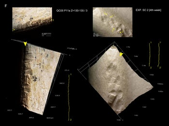 Chop marks, cortical scars and chipped marks on the anterior and posterior surface of metapodial shafts from Qesem Cave