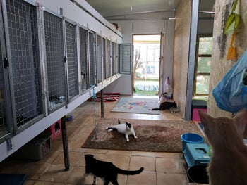 Inside the House for Rescuing Cats.