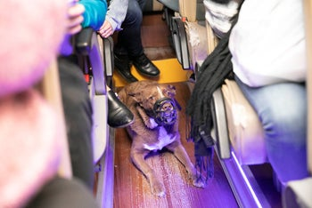 The first dog to ever travel on public transports in Tel Aviv on a Shabbat, on November 22, 2019.